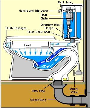 toilet anatomy